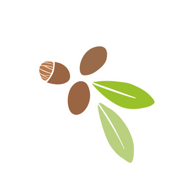 Shea seeds and leaves doodle vector hand drawn illustration. Simple icon isolated on white background