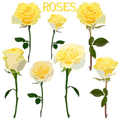 set of images of yellow roses on a stem isolated on a white background