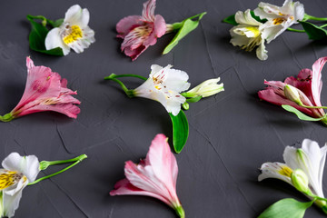 Pattern with pink and white flowers on a dark background. Alstroemeria flowers on a gray background. Background for greeting card, banner, blog. Alstomerias live flowers. Flat lay, top view.