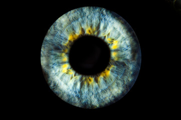 Deurstickers Iris Human blue eye iris. Pupil in macro on black background