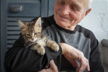 An elderly man holds a Maine Coon kitten and smiles to him, selective focus.