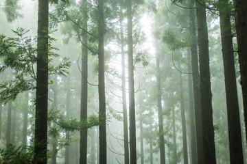 Fotobehang Bleke violet 湿度の高い杉林