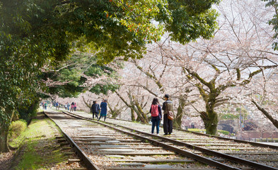People enjoying walking at Keage incline with cherry blossoms in Kyoto, Japan