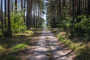 Forest road in Tuchola Pinewoods in Kujawy-Pomerania Province of Poland
