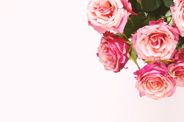 Flowers composition. Roses flowers on white background. Flat lay, top view, copy space. - Image