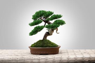 bonsai japan on mat