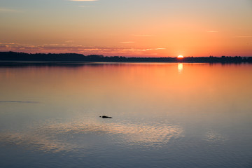 Sunrise on a lake in Florida with a silhouette of an alligator