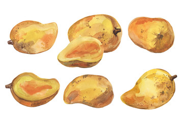 Watercolor set of mango on a white background.