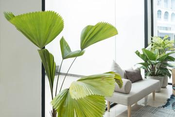 Indoor plant interior decoration in office