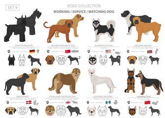 Working, service and watching dogs collection isolated on white. Flat style. Different color and country of origin