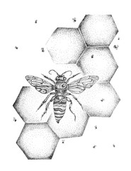 Bee, honey, hive, beekeeping illustration, pen and ink, drawing, engraving, line art, vintage, ink