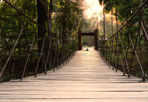 low level view of a steel suspension foot bridge in a tropical forest - Wooden slat river crossing adventure trail with a dog watching the warm sun rays through the trees