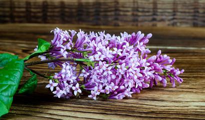 lilac close-up big branch