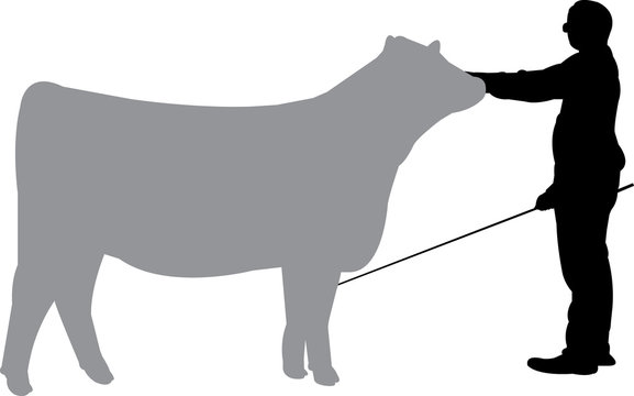 Cattle Show Silhouette Shape Vector
