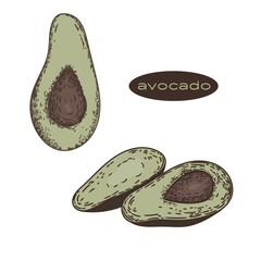 Vector hand drawn of avocados isolated on white background.