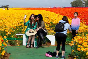 Visitors pose for pictures in a field of blooming giant Tecolote ranunculus flowers at the Flower Fields at Carlsbad Ranch in Carlsbad, California