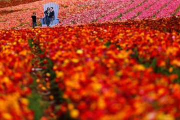 Visitors pose for a picture in a field of blooming giant Tecolote ranunculus flowers at the Flower Fields at Carlsbad Ranch in Carlsbad, California