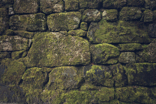 mossy wall green with brick work