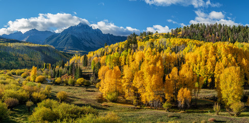 Early Morning Autumn Aspen along Ridgway Colorado County Road 7	 Wall mural