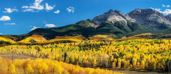 Autumn Aspen along Ridgway Colorado County Road 5