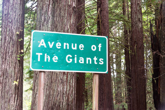 Avenue of The Giants Sign