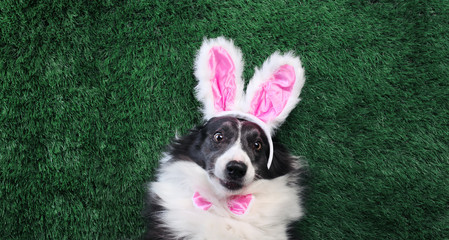 Happy dog with pink bunny ears laying on grass