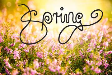 Sunny Erica Flower Field, Calligraphy Spring, Bokeh