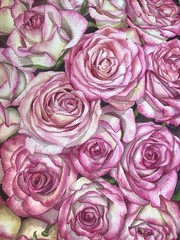 Foto op Textielframe Roses Hand drawn watercolor illustration pink roses background