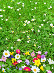 bunte Blumen Wiese Frühling als Hintergrund