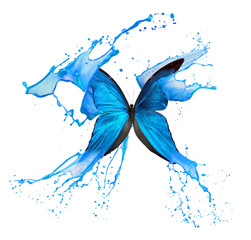 Fototapete - butterfly in blue pait splash isolated on a white background