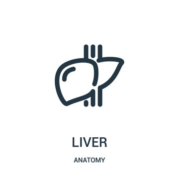 liver icon vector from anatomy collection. Thin line liver outline icon vector illustration. Linear symbol for use on web and mobile apps, logo, print media.