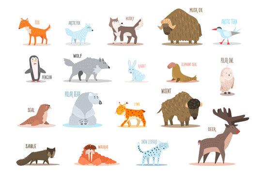 Set of Arctic and Antarctic animals. Fox, wolf, rabbit, penguin, sable, walrus, bear, husky, musk ox, tern, elephant seal, owl, deer, lynx, snow leopard. Flat vector design