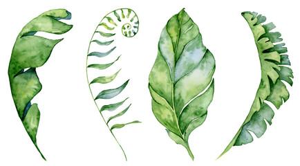 Watercolor monstera leaves set. Tropical plant illustration Wall mural
