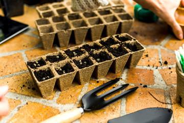 Seeds at jiffy pots