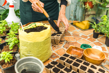Planting seeds in jiffy pots