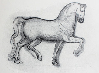 Sketch of horse, pencil drawing by Leonardo Da Vinci in a vintage book Leonard de Vinci, Eugene Muntz, 1899, Paris