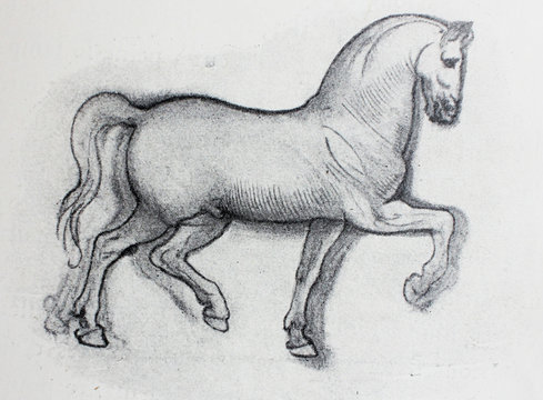 Sketch of horse, pencil drawing by Leonardo Da Vinci in a vintage book Leonard de Vinci, Eugene Muntz, 1899, Paris