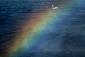 A swan is pictured through a rainbow created by the water falling from the Jet d'Eau water fountain in Geneva