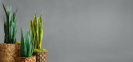 Botanical home decor concept