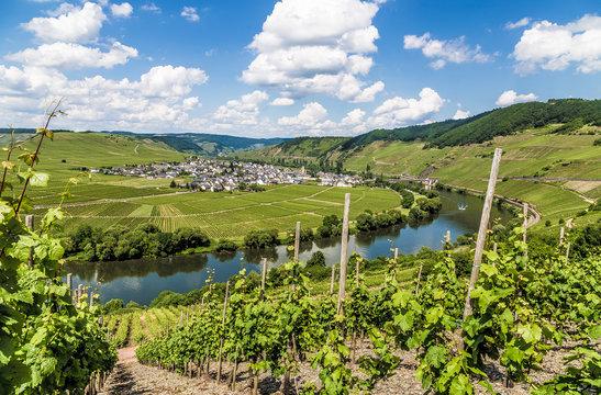Moselschleife bei Trittenheim Rheinland-Pfalz Deutschland