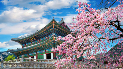 Wall Mural - Cherry blossoms in spring, Seoul in Korea.