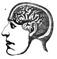 Illustration of face and brain in the head of a man in a cut  in a vintage book Home treatment technique, V. Kaminskiy, 1897