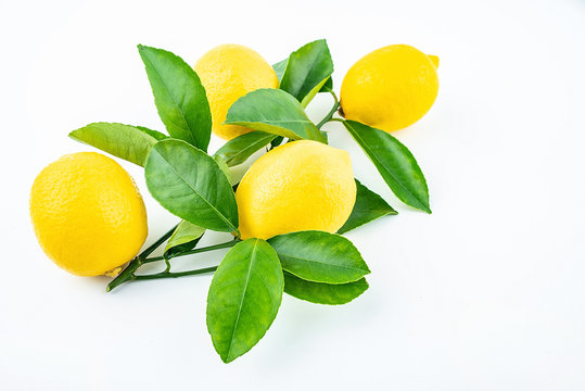 Freshly picked yellow lemon on a white background