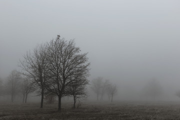 Autumn landscape with trees in thick fog and frost on the branches