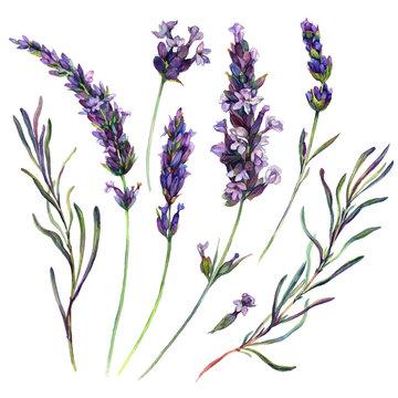 Watercolor Lavender Elements