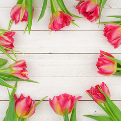 Square frame of pink tulip flowers against a white wood panel background. Copy space.