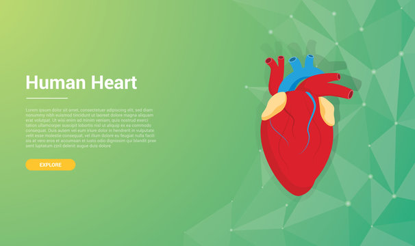 human heart template wallpaper background design concept with free space for text - vector illustration