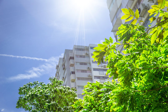 green eco building outdoor apartment with tree and clear blue sky.