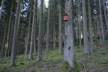 Nest box inside a fir forest