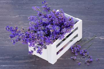 Fresh lavender in white basket on grey wooden background.